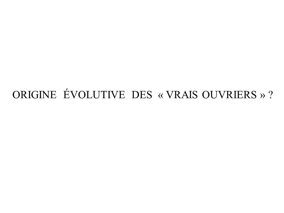 ORIGINE ÉVOLUTIVE DES « VRAIS OUVRIERS »