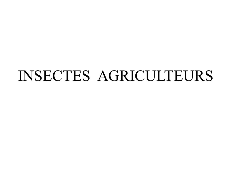 INSECTES AGRICULTEURS