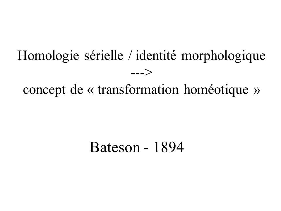 Bateson - 1894 Homologie sérielle / identité morphologique --->