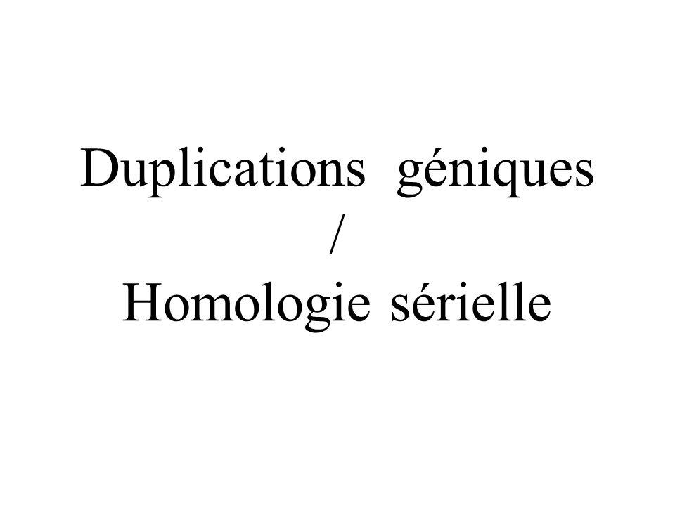 Duplications géniques