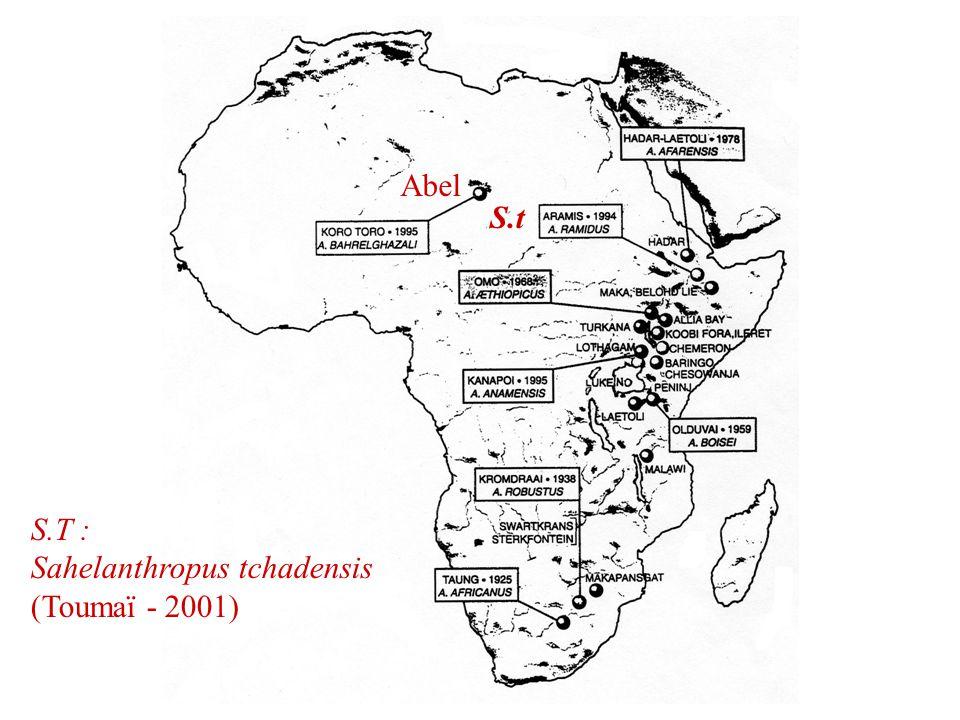 Abel S.t S.T : Sahelanthropus tchadensis (Toumaï - 2001)