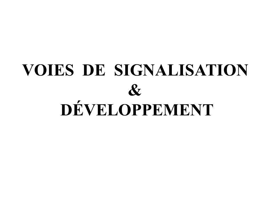 VOIES DE SIGNALISATION