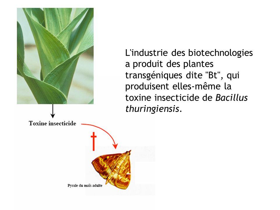 L industrie des biotechnologies a produit des plantes transgéniques dite Bt , qui produisent elles-même la toxine insecticide de Bacillus thuringiensis.