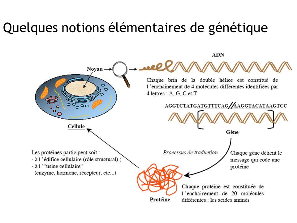 Quelques notions élémentaires de génétique