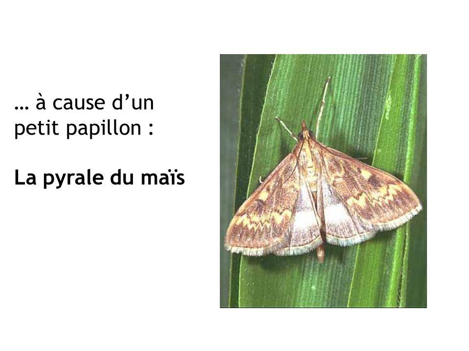 … à cause d'un petit papillon :