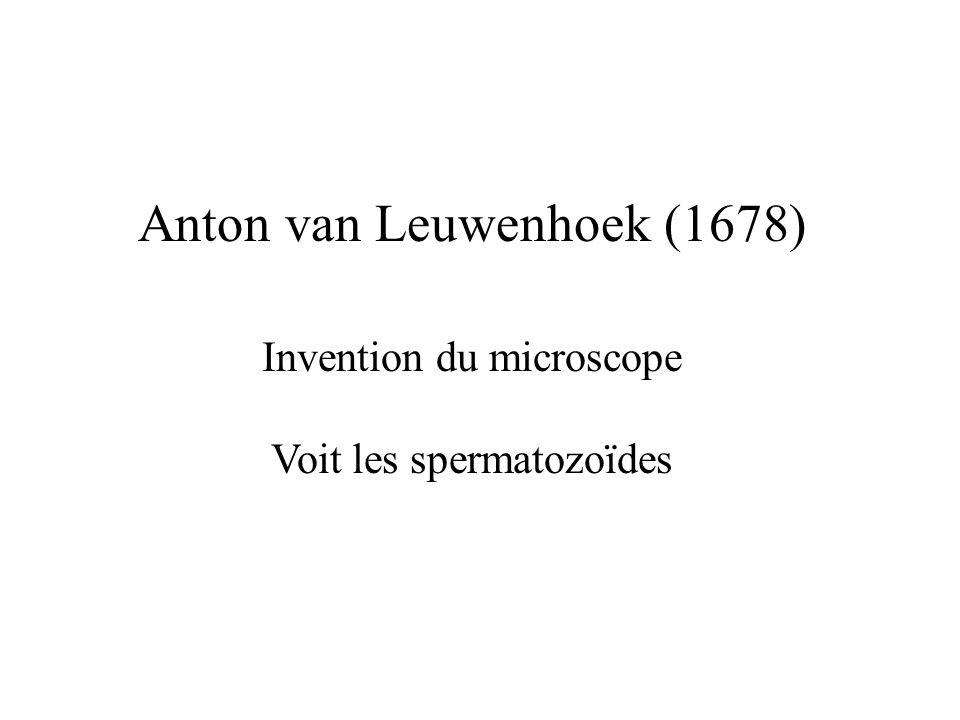 Anton van Leuwenhoek (1678)
