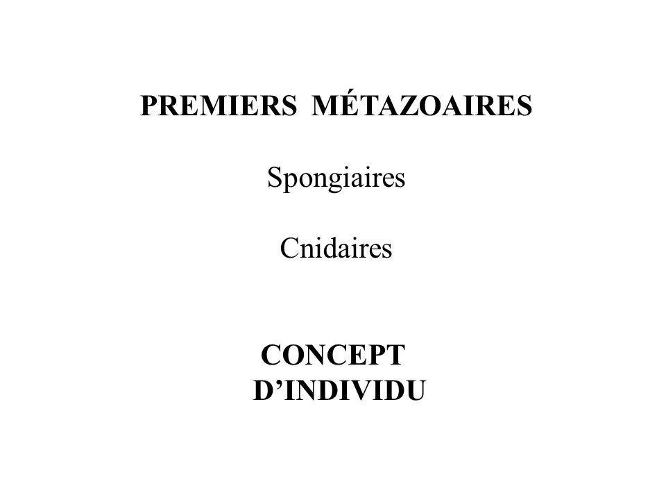 PREMIERS MÉTAZOAIRES Spongiaires Cnidaires CONCEPT D'INDIVIDU