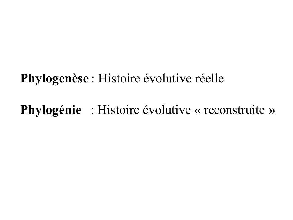 Phylogenèse : Histoire évolutive réelle