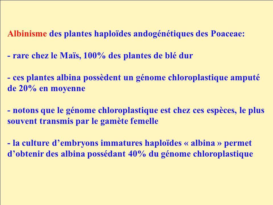 Albinisme des plantes haploïdes andogénétiques des Poaceae: