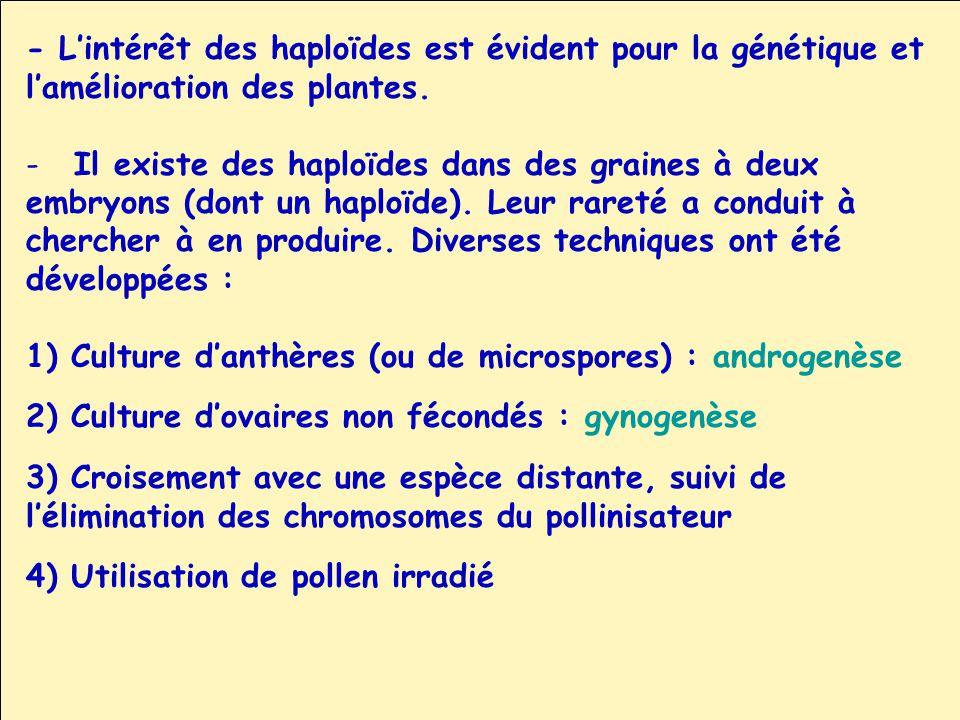 - L'intérêt des haploïdes est évident pour la génétique et
