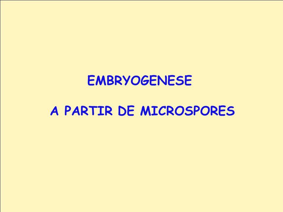A PARTIR DE MICROSPORES
