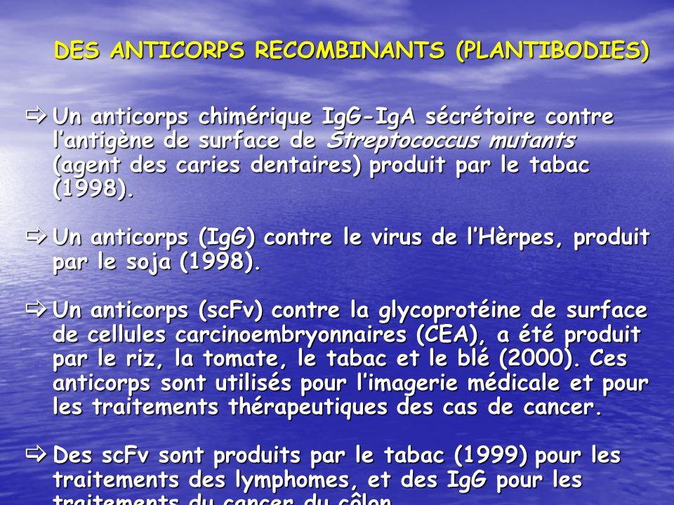 DES ANTICORPS RECOMBINANTS (PLANTIBODIES)
