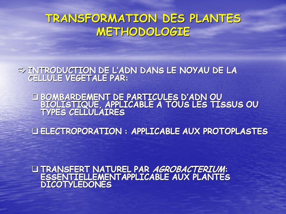 TRANSFORMATION DES PLANTES METHODOLOGIE