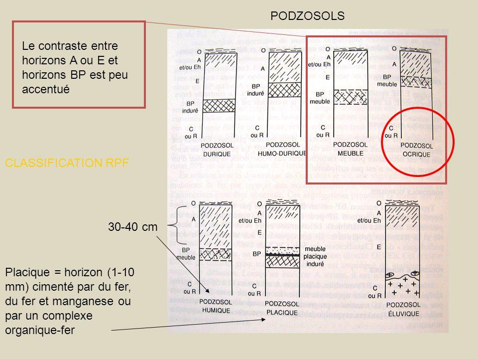 PODZOSOLS Le contraste entre horizons A ou E et horizons BP est peu accentué. CLASSIFICATION RPF. 30-40 cm.