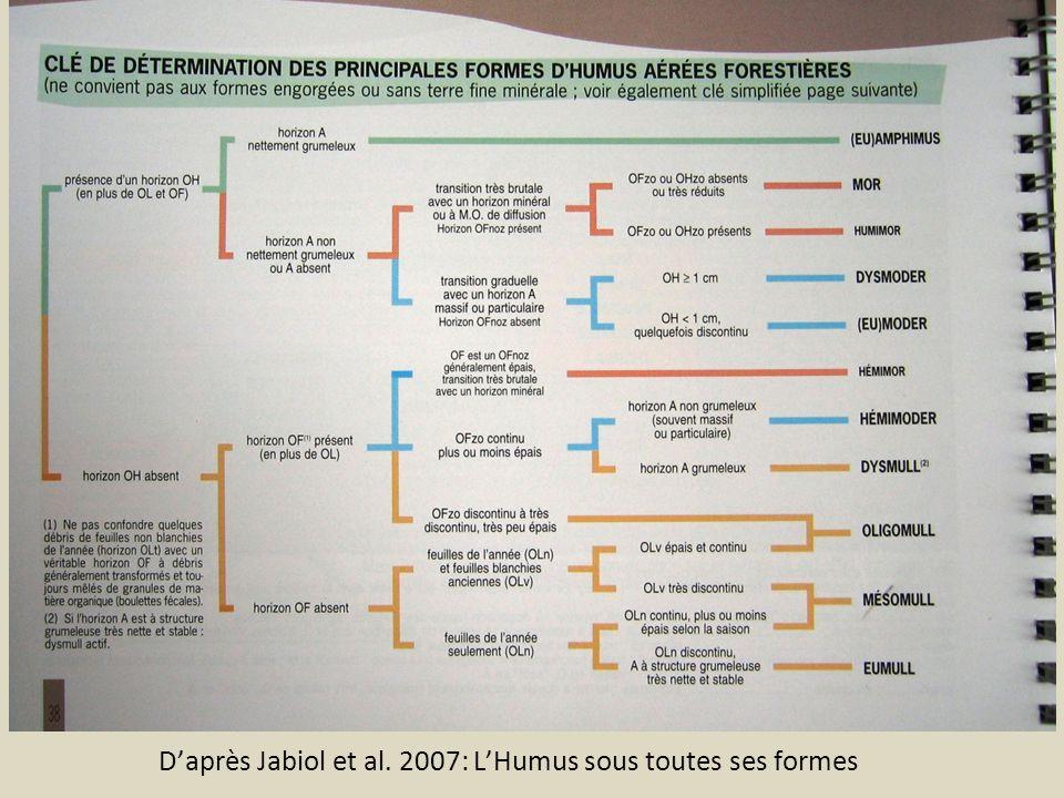 D'après Jabiol et al. 2007: L'Humus sous toutes ses formes