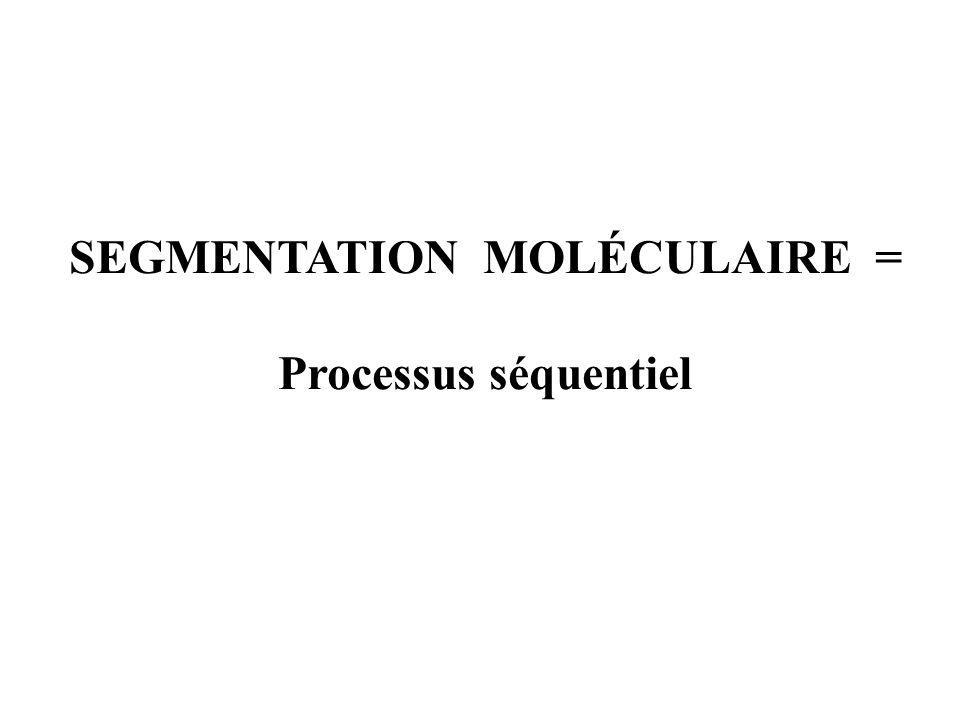 SEGMENTATION MOLÉCULAIRE =