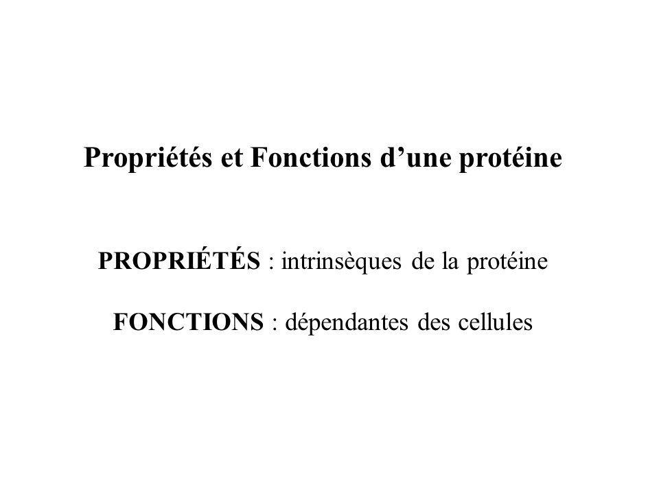 Propriétés et Fonctions d'une protéine