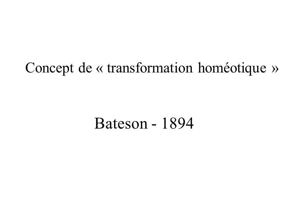 Concept de « transformation homéotique »