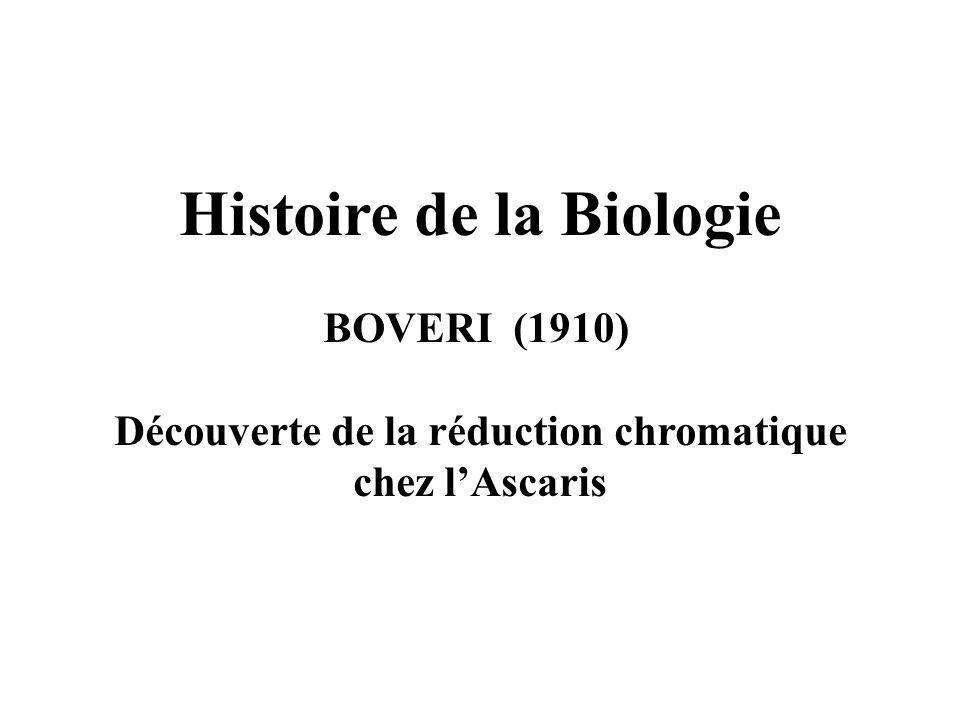 Histoire de la Biologie Découverte de la réduction chromatique
