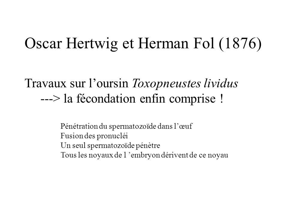 Oscar Hertwig et Herman Fol (1876)
