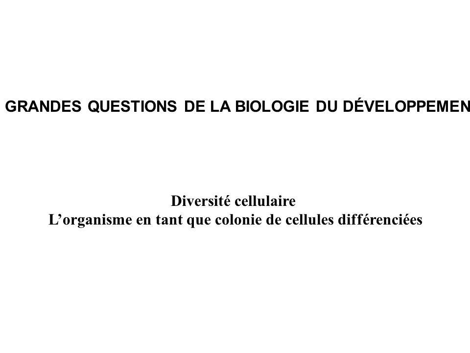 L'organisme en tant que colonie de cellules différenciées