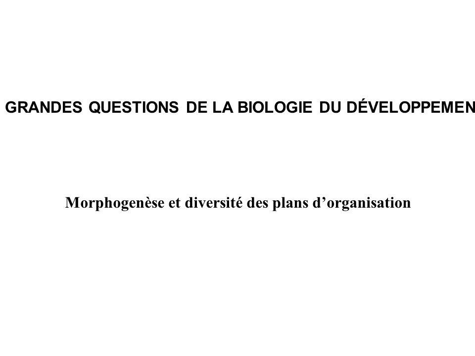 Morphogenèse et diversité des plans d'organisation
