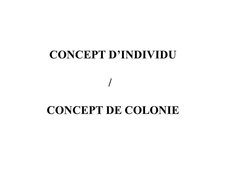 CONCEPT D'INDIVIDU / CONCEPT DE COLONIE