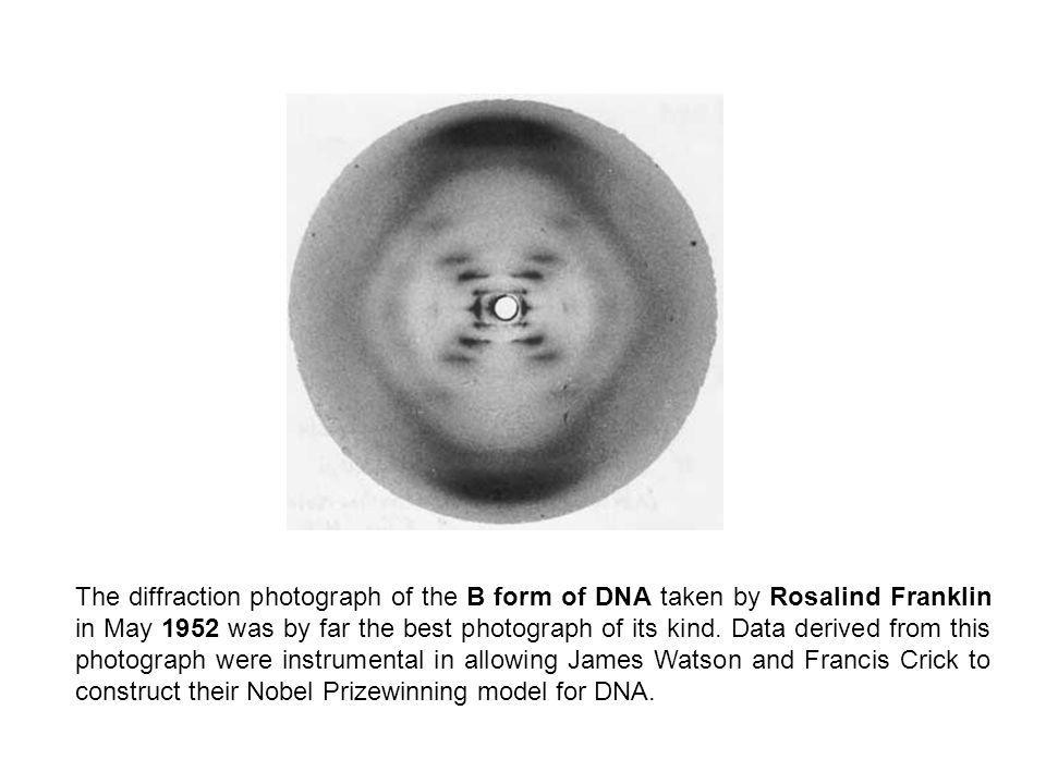 The diffraction photograph of the B form of DNA taken by Rosalind Franklin in May 1952 was by far the best photograph of its kind.