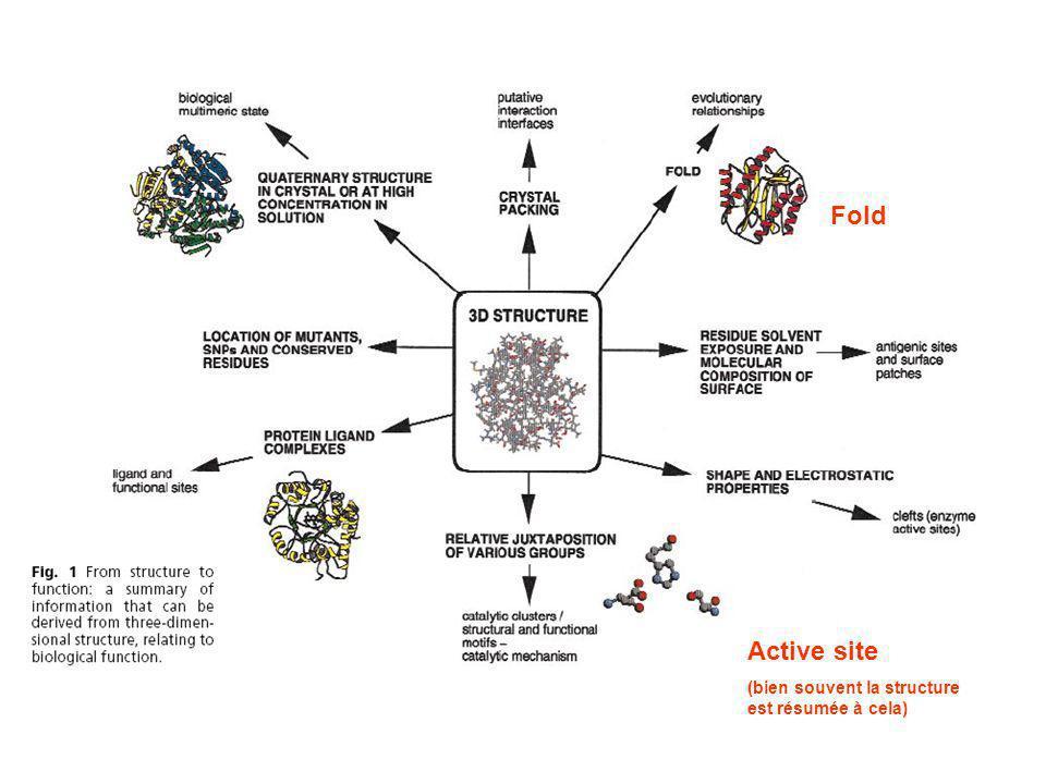 Fold Active site (bien souvent la structure est résumée à cela)