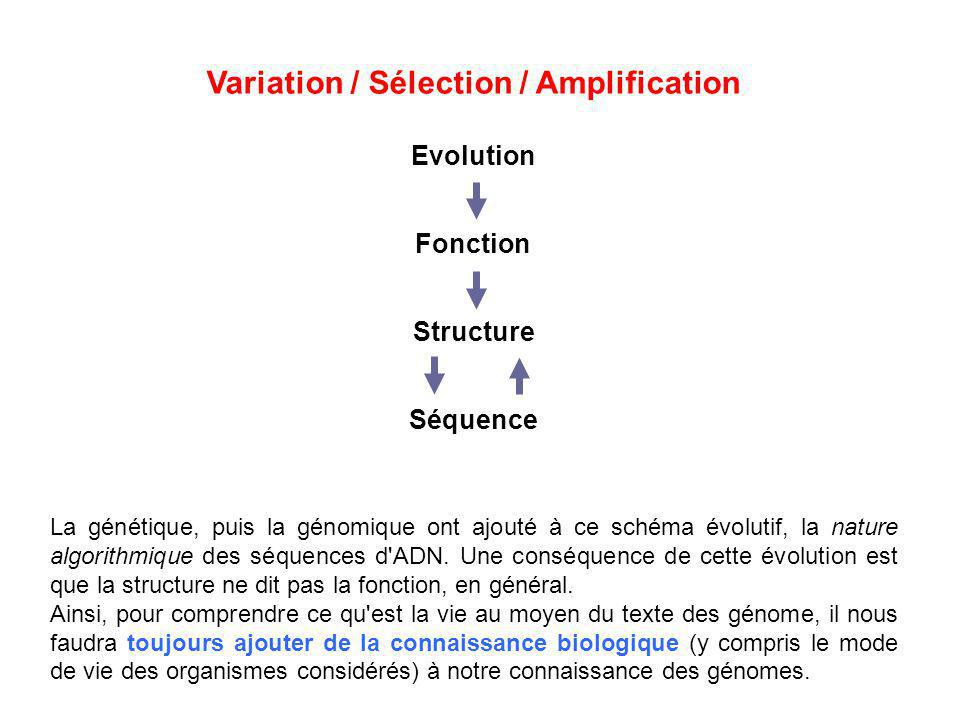 Variation / Sélection / Amplification