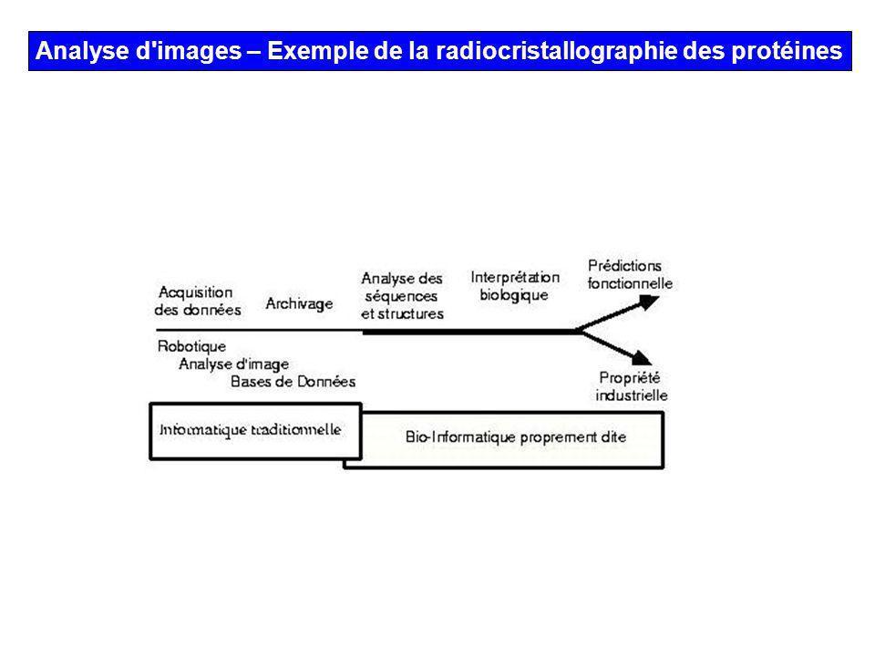 Analyse d images – Exemple de la radiocristallographie des protéines