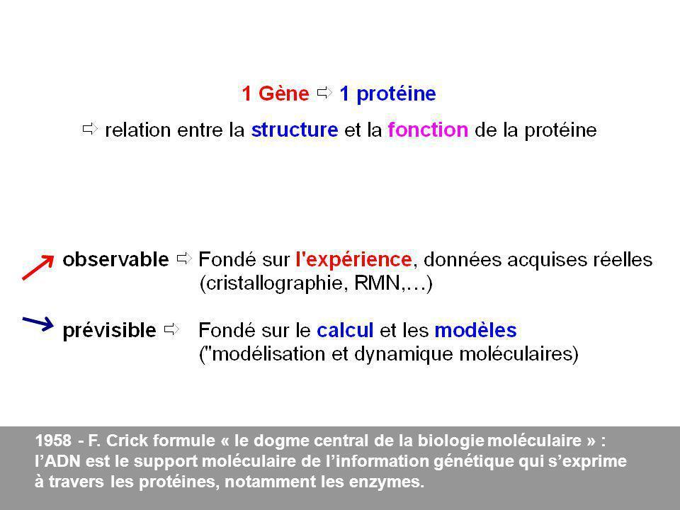 - F. Crick formule « le dogme central de la biologie moléculaire » :