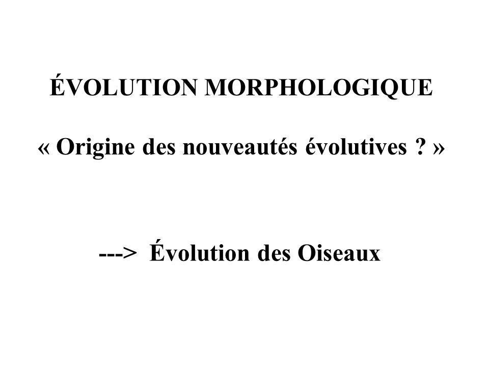 ÉVOLUTION MORPHOLOGIQUE « Origine des nouveautés évolutives »