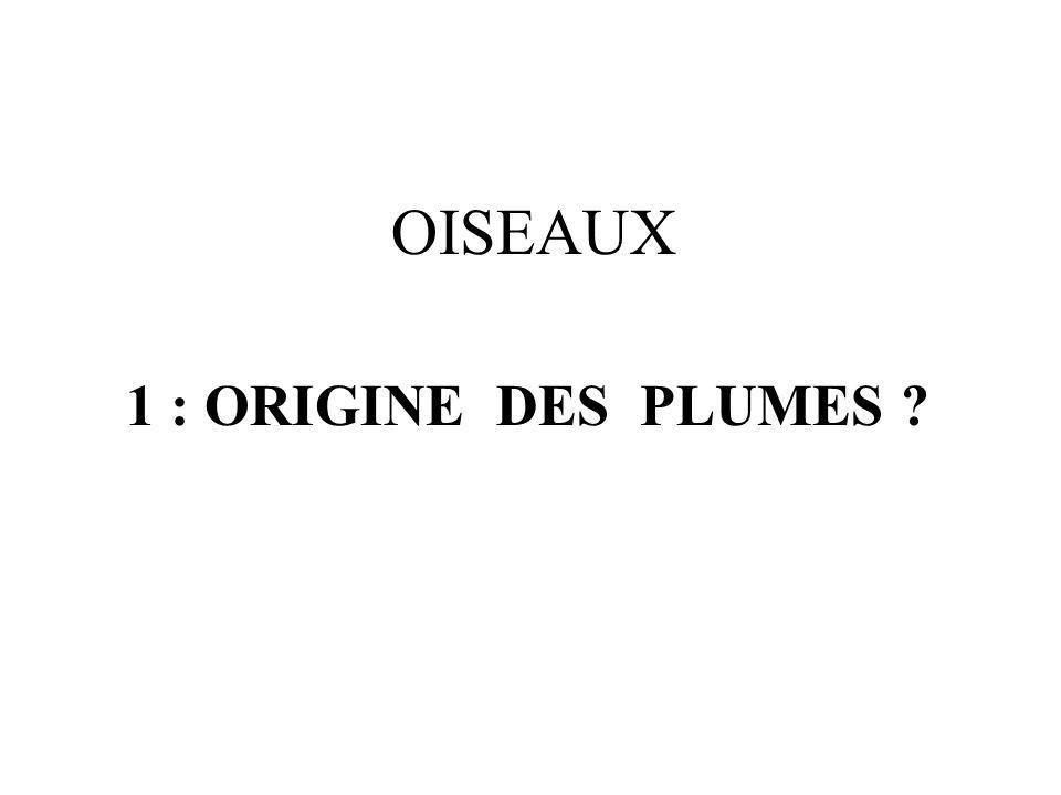 OISEAUX 1 : ORIGINE DES PLUMES