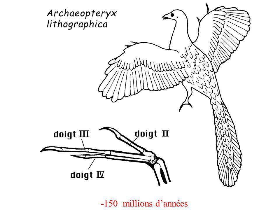 -150 millions d'années