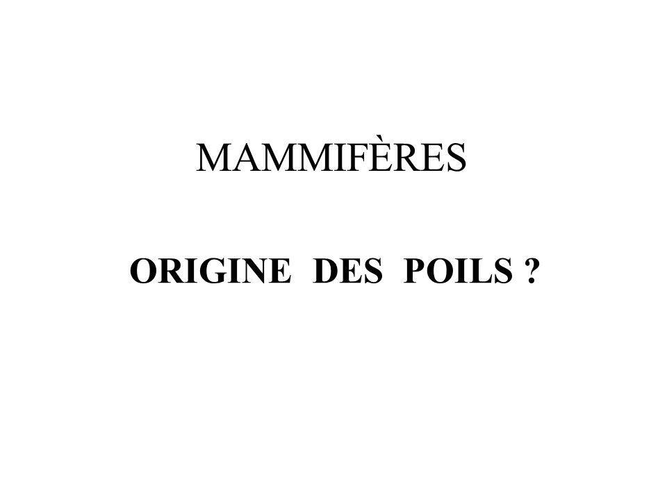 MAMMIFÈRES ORIGINE DES POILS