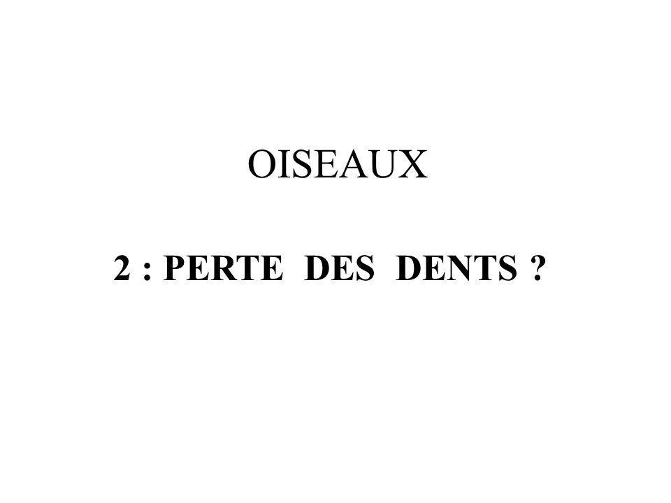OISEAUX 2 : PERTE DES DENTS