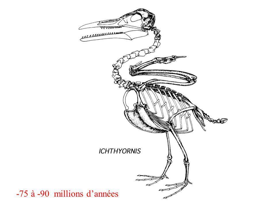 -75 à -90 millions d'années