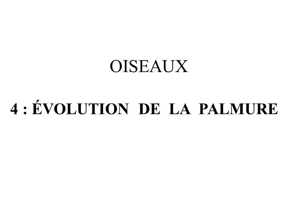 OISEAUX 4 : ÉVOLUTION DE LA PALMURE