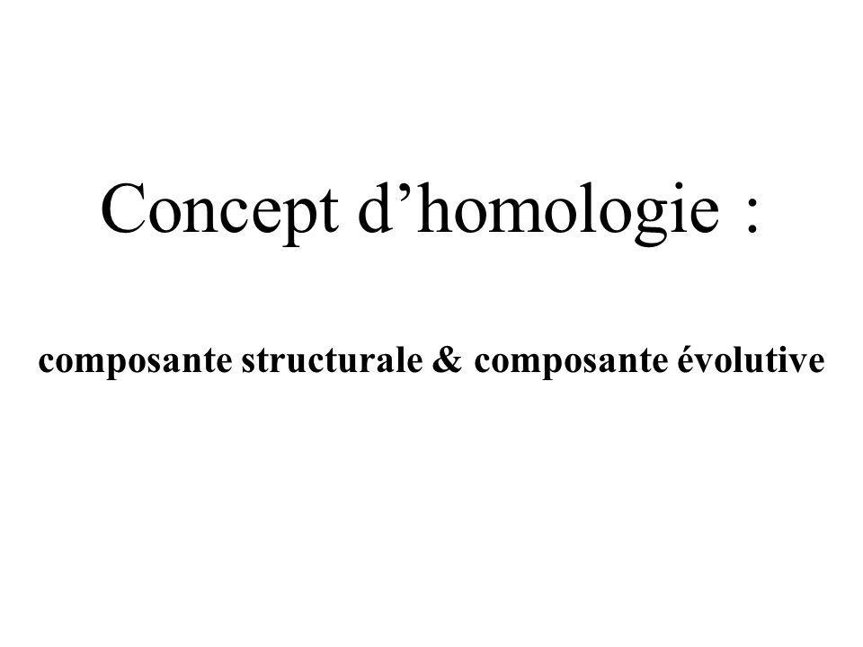composante structurale & composante évolutive