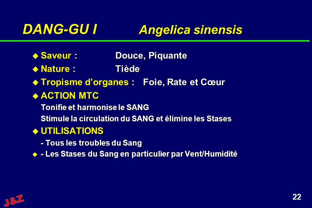 DANG-GU I Angelica sinensis