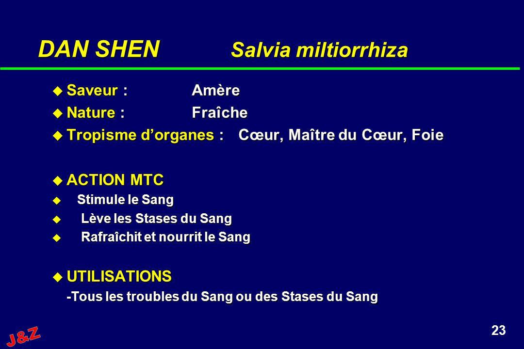 DAN SHEN Salvia miltiorrhiza