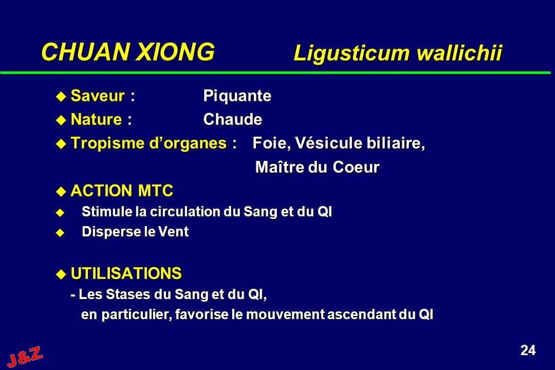 CHUAN XIONG Ligusticum wallichii