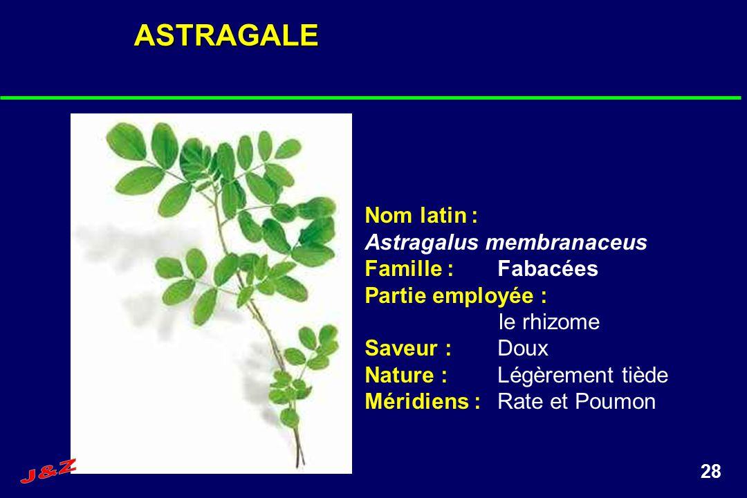 ASTRAGALE Nom latin : Astragalus membranaceus Famille : Fabacées