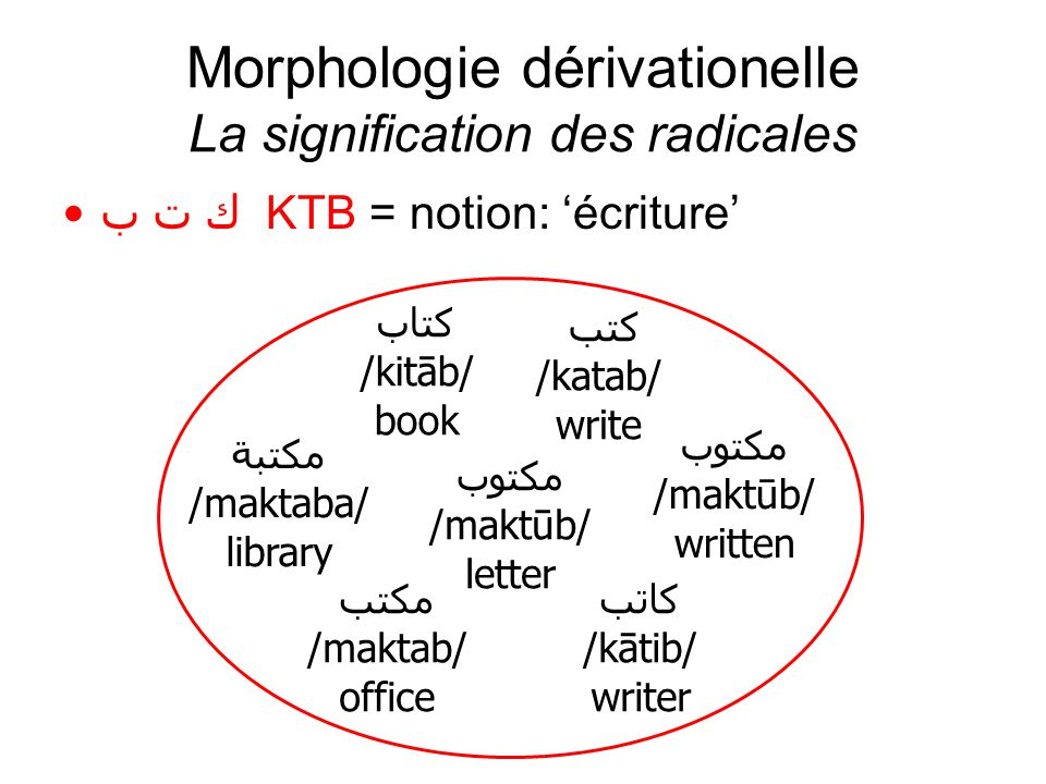 Morphologie dérivationelle La signification des radicales