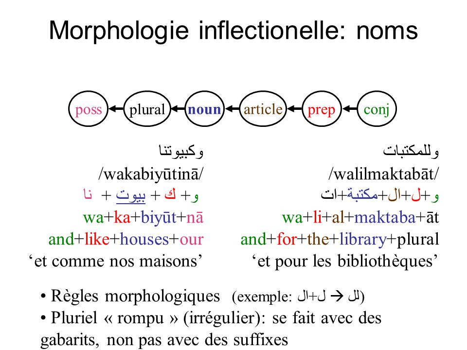 Morphologie inflectionelle: noms