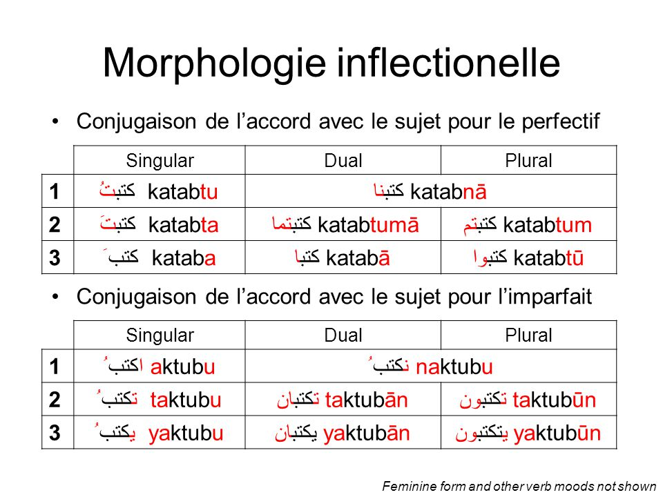 Morphologie inflectionelle