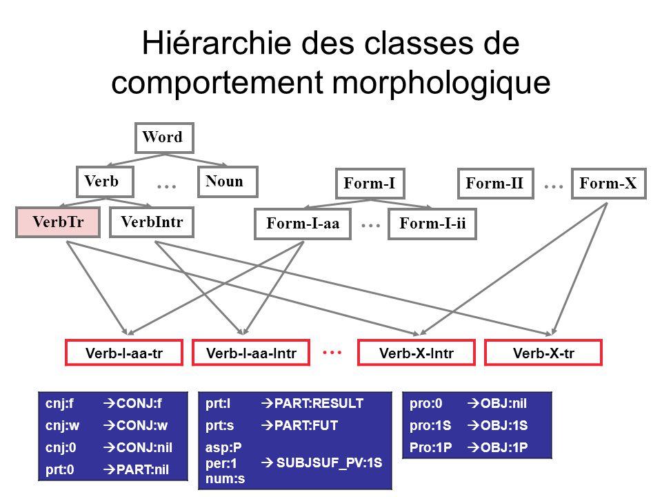 Hiérarchie des classes de comportement morphologique