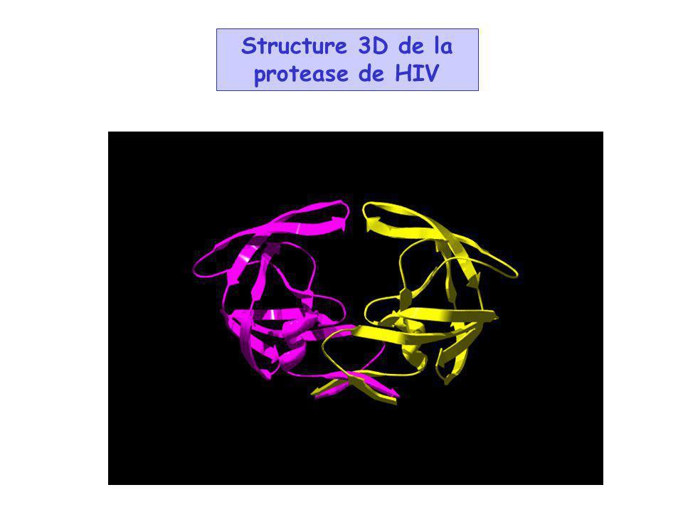 Structure 3D de la protease de HIV