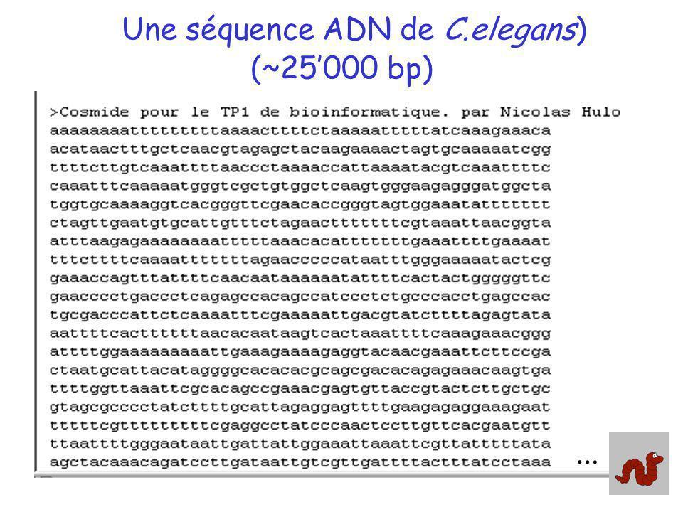 Une séquence ADN de C.elegans) (~25'000 bp)